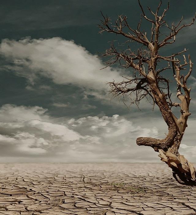 desert-279862-1280-50h-700px.jpg